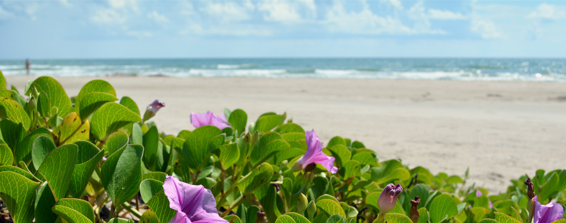 Beach Flower background